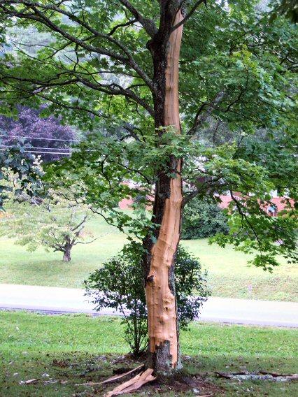 Lightningtree3